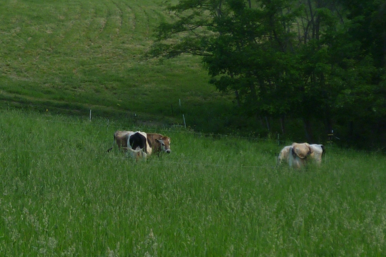 grazed-and-clipped
