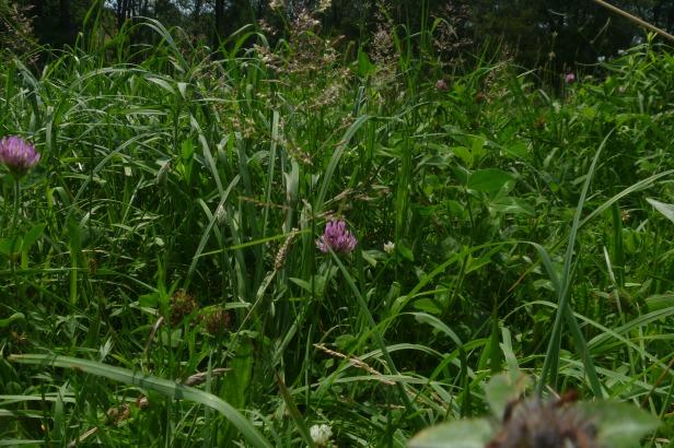 mixed weeds