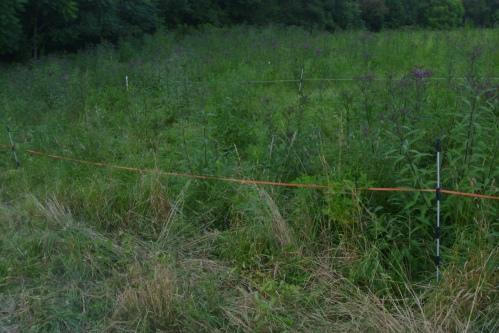 weedy paddock